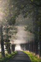 Rays of Fog by Lars Van de Goor Image/poster design © Image Conscious all rights reserved.